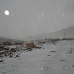 Real de Catorce nieve 6 150x150 Cae Nieve en Real de Catorce