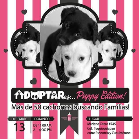 Adoptar es Puppy Edition